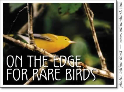 tofino birding - on the edge for rare birds in tofino