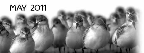 tofino time may 2011