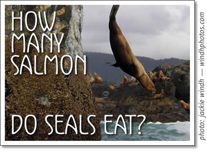 Tofino fish how much salmon do seals eat for How do fish eat